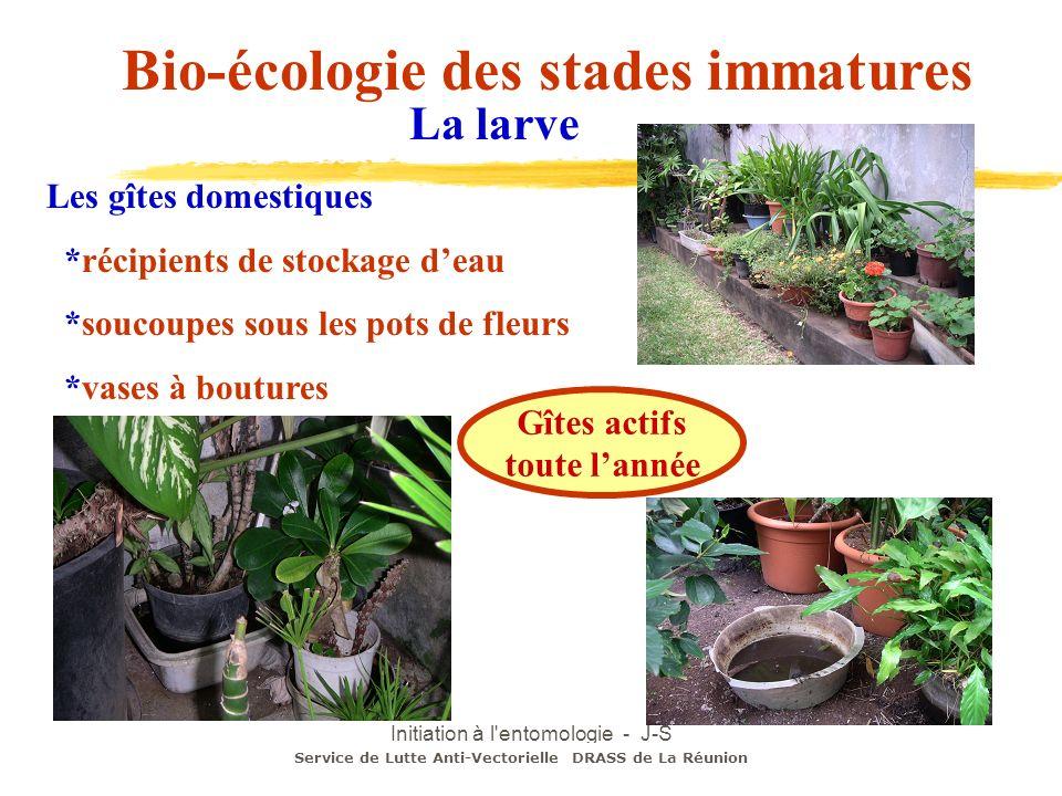 Initiation à l'entomologie - J-S DEHECQ Les gîtes domestiques *récipients de stockage deau *soucoupes sous les pots de fleurs *vases à boutures Gîtes