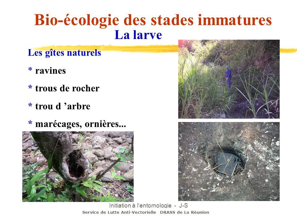 Initiation à l'entomologie - J-S DEHECQ Les gîtes naturels * ravines * trous de rocher * trou d arbre * marécages, ornières... Service de Lutte Anti-V
