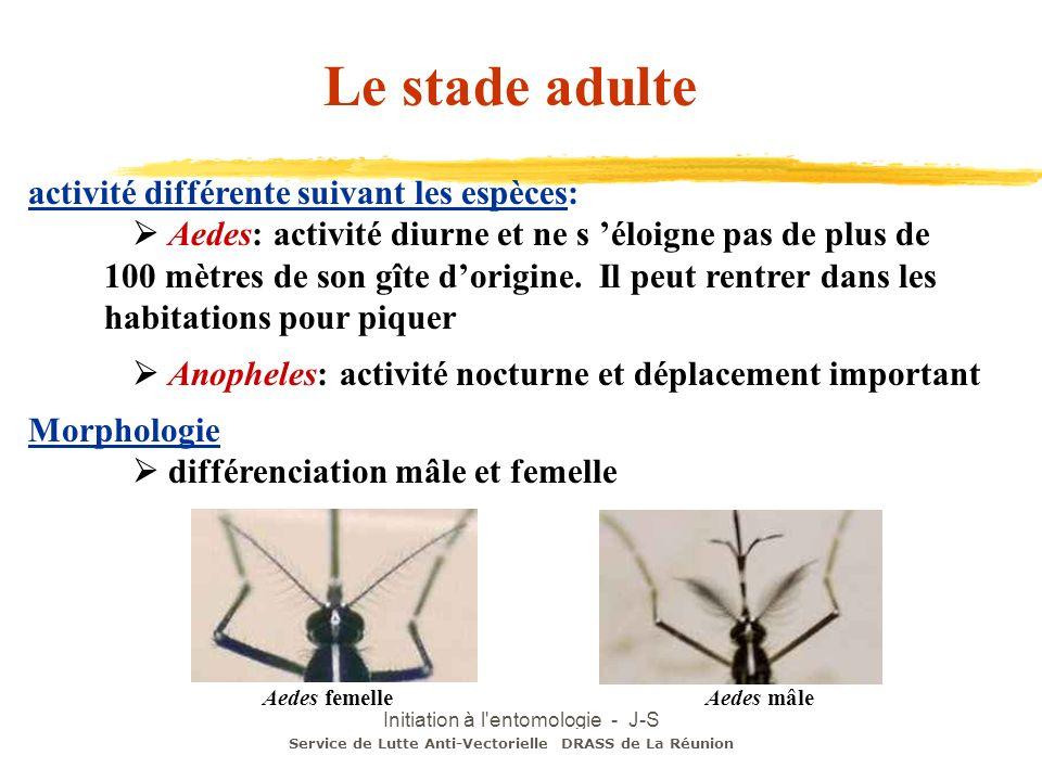 Initiation à l'entomologie - J-S DEHECQ Le stade adulte activité différente suivant les espèces: Aedes: activité diurne et ne s éloigne pas de plus de