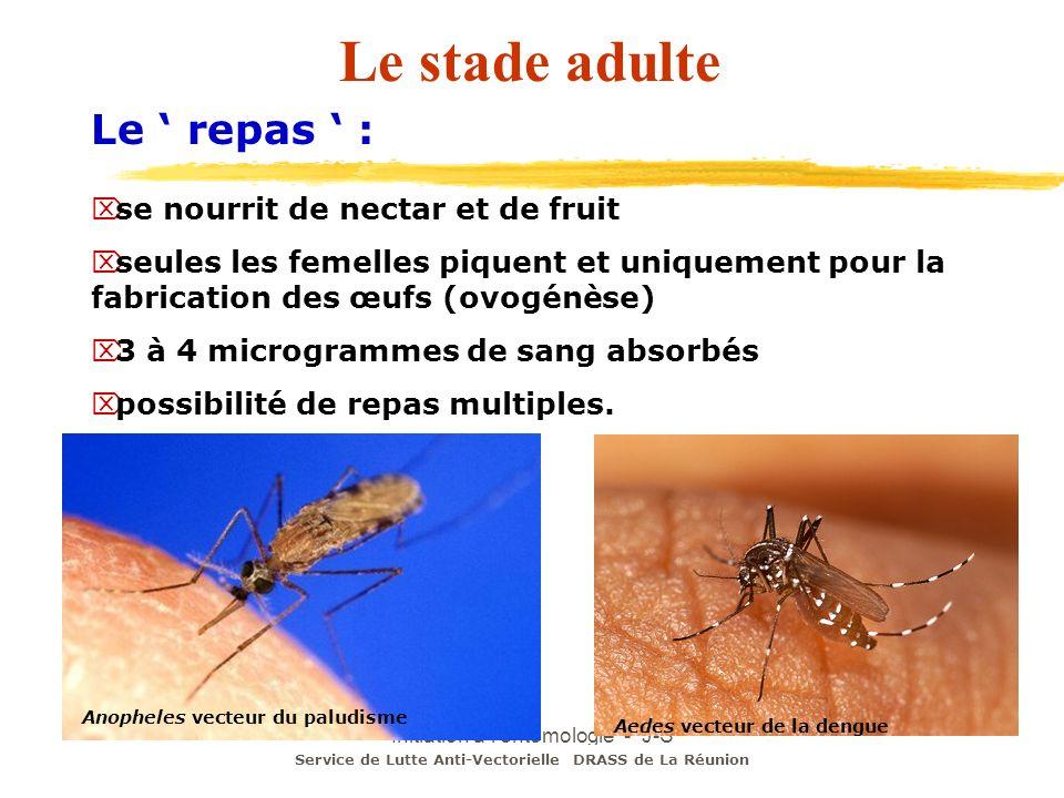 Initiation à l'entomologie - J-S DEHECQ Le stade adulte Le repas : se nourrit de nectar et de fruit seules les femelles piquent et uniquement pour la
