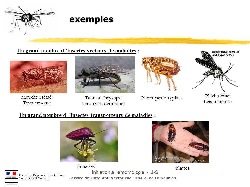 Initiation à l'entomologie - J-S DEHECQ exemples Un grand nombre d insectes vecteurs de maladies : Mouche Tsétsé: Trypanosome Taon ou chrysops: loase