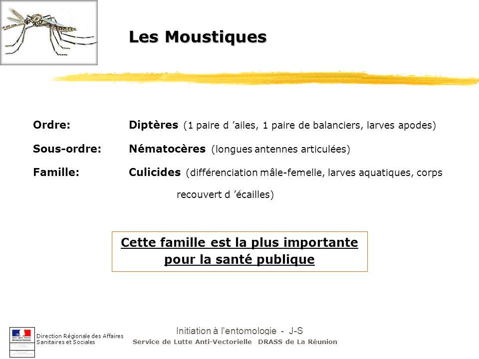 Initiation à l'entomologie - J-S DEHECQ Les Moustiques Ordre:Diptères (1 paire d ailes, 1 paire de balanciers, larves apodes) Sous-ordre:Nématocères (