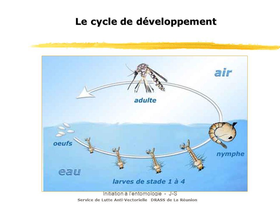 Initiation à l'entomologie - J-S DEHECQ Le cycle de développement Service de Lutte Anti-Vectorielle DRASS de La Réunion