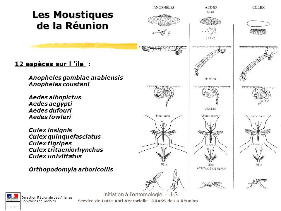 Initiation à l entomologie - J-S DEHECQ Entomologie du paludisme à la Réunion Direction Régionale des Affaires Sanitaires et Sociales 1985-1999 2000-2003 - 1 seul vecteur potentiel: Anopheles - répartition hétérogène dans le temps et l espace (côte Est en été) - espérance de vie inférieure à 5 jours (max 12j en fin d été) - faible capacité vectorielle Service de Lutte Anti-Vectorielle DRASS de La Réunion