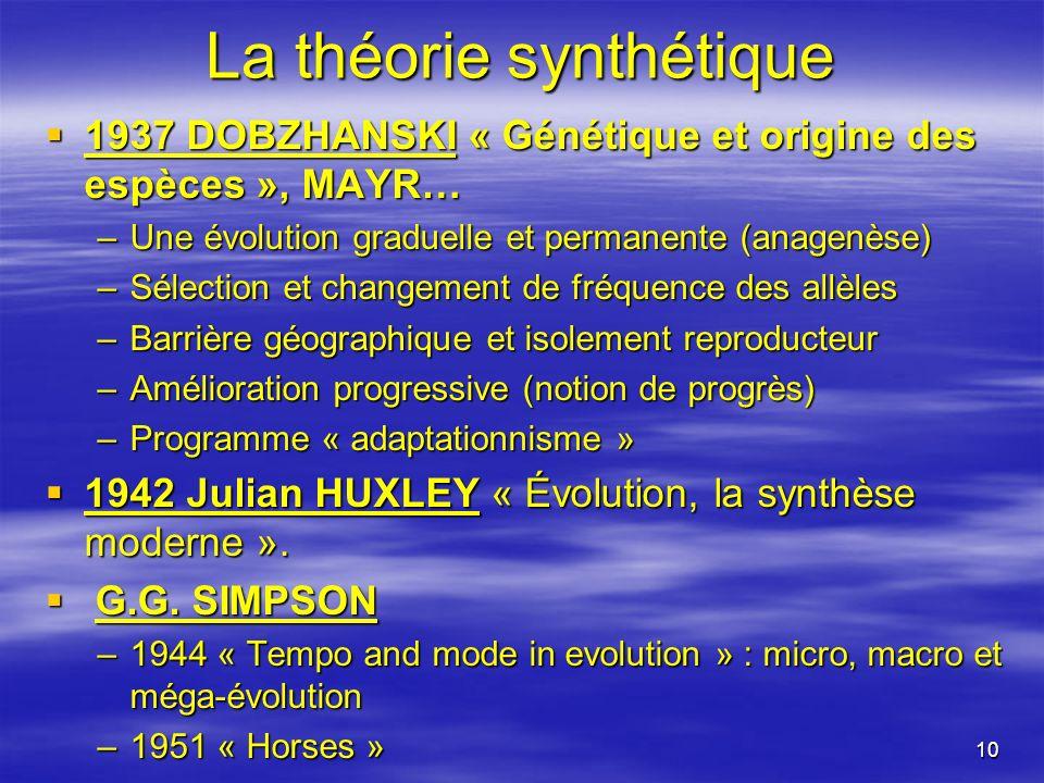 10 La théorie synthétique 1937 DOBZHANSKI « Génétique et origine des espèces », MAYR… 1937 DOBZHANSKI « Génétique et origine des espèces », MAYR… –Une
