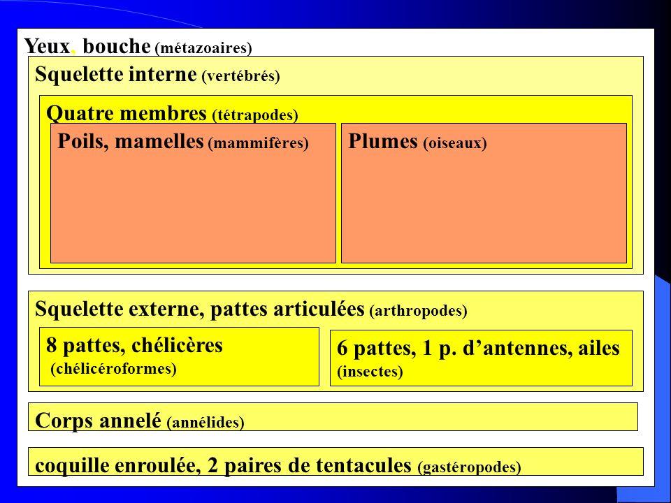 Yeux, bouche (métazoaires) Squelette interne (vertébrés) Quatre membres (tétrapodes) Poils, mamelles (mammifères) Plumes (oiseaux) Squelette externe,