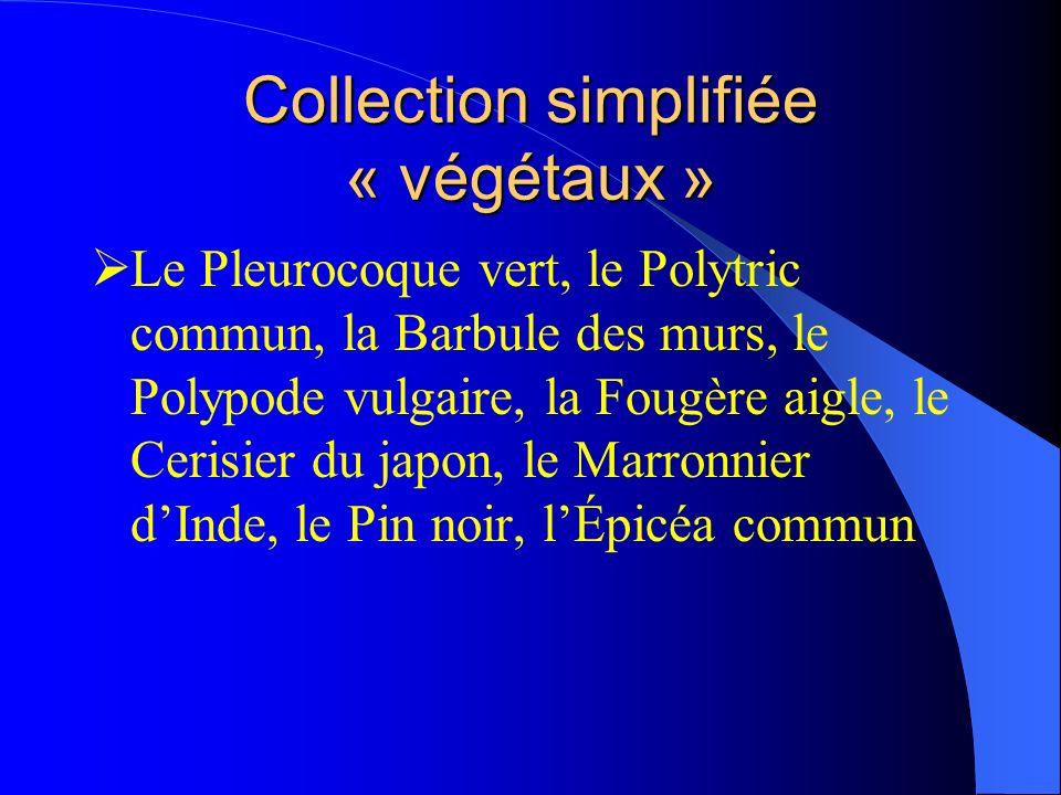 Collection simplifiée « végétaux » Le Pleurocoque vert, le Polytric commun, la Barbule des murs, le Polypode vulgaire, la Fougère aigle, le Cerisier d