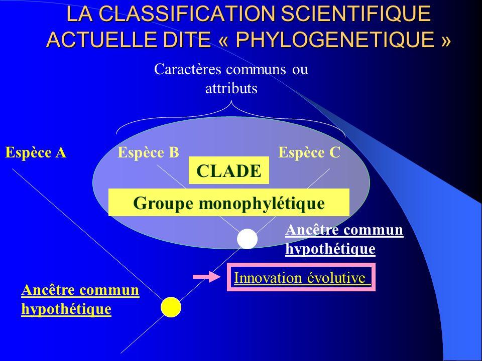 LA CLASSIFICATION SCIENTIFIQUE ACTUELLE DITE « PHYLOGENETIQUE » Espèce BEspèce C Caractères communs ou attributs Ancêtre commun hypothétique Espèce A