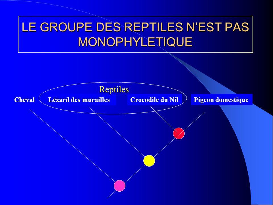LE GROUPE DES REPTILES NEST PAS MONOPHYLETIQUE Lézard des muraillesPigeon domestiqueCrocodile du Nil Reptiles Cheval