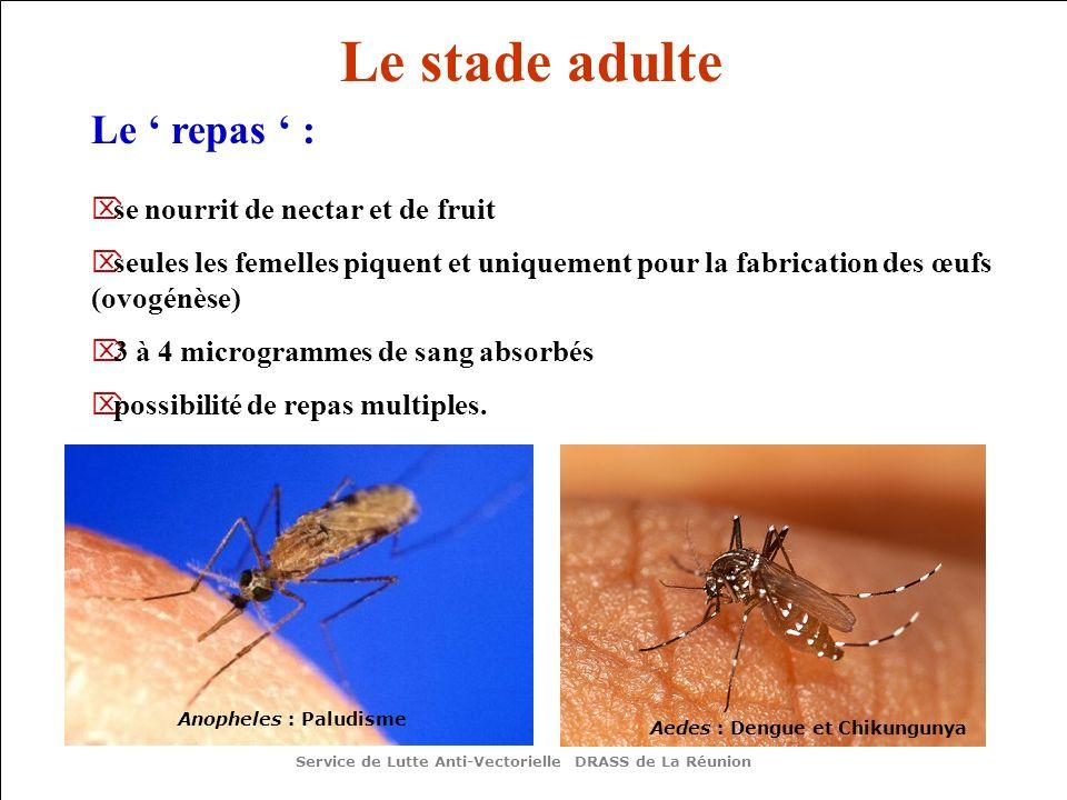 Le stade adulte Le repas : se nourrit de nectar et de fruit seules les femelles piquent et uniquement pour la fabrication des œufs (ovogénèse) 3 à 4 m