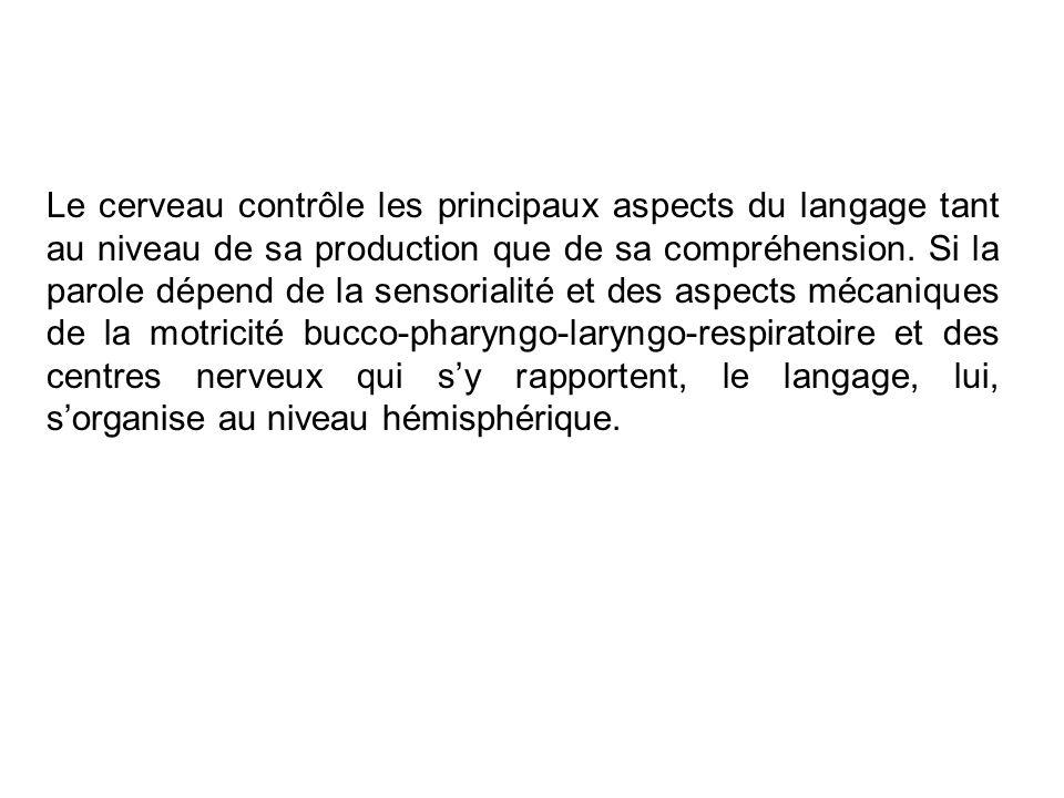 Le cerveau contrôle les principaux aspects du langage tant au niveau de sa production que de sa compréhension. Si la parole dépend de la sensorialité