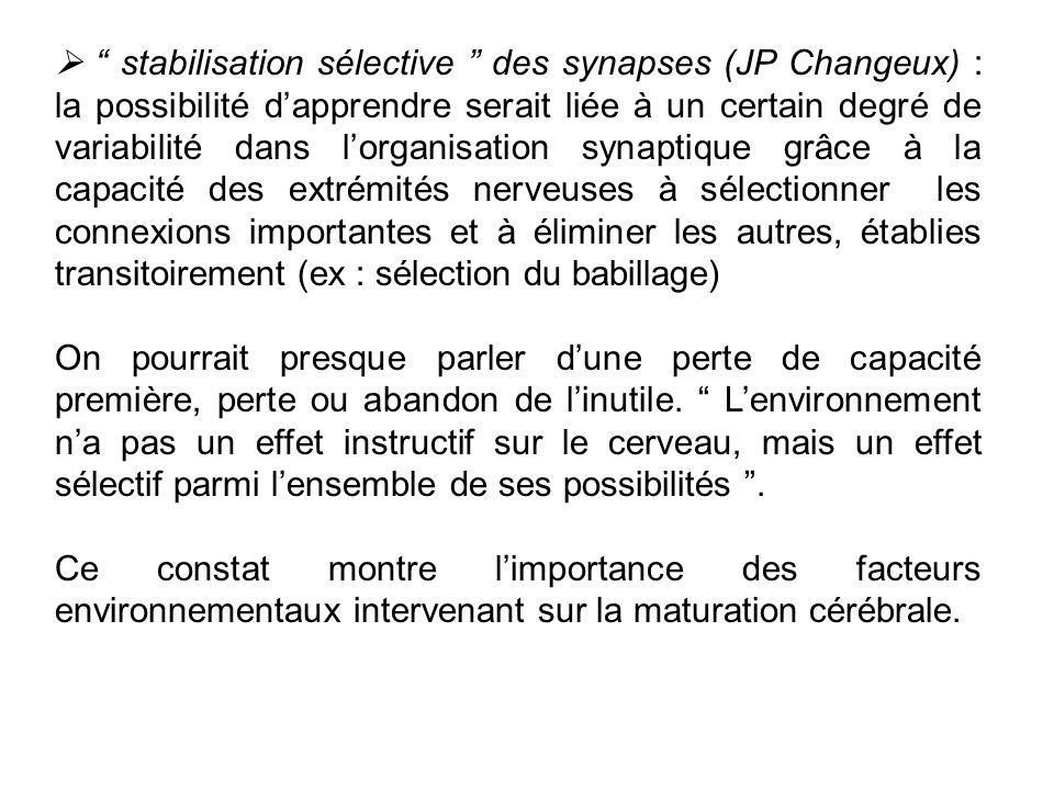 stabilisation sélective des synapses (JP Changeux) : la possibilité dapprendre serait liée à un certain degré de variabilité dans lorganisation synapt