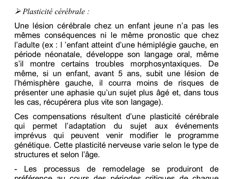 Plasticité cérébrale : Une lésion cérébrale chez un enfant jeune na pas les mêmes conséquences ni le même pronostic que chez ladulte (ex : l enfant at