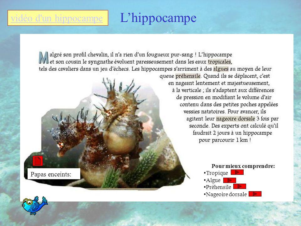 Lhippocampe Pour mieux comprendre: Tropique Algue Préhensile Nageoire dorsale Papas enceints: vidéo d un hippocampe