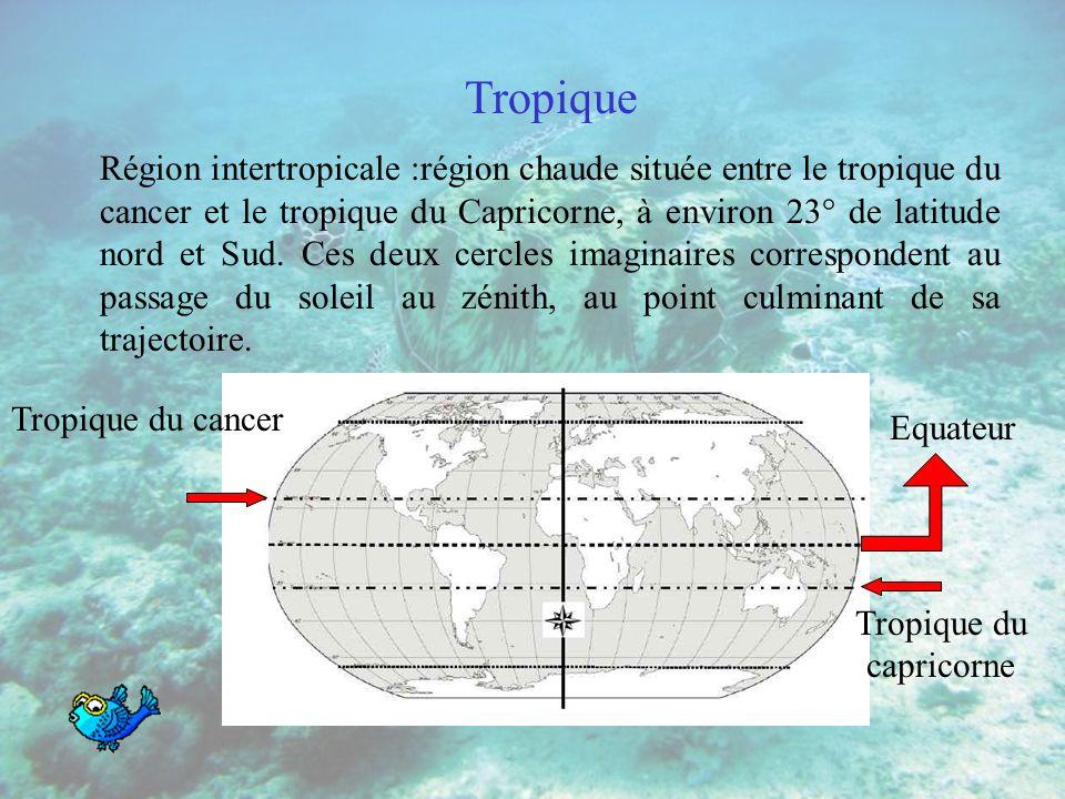 Tropique Région intertropicale :région chaude située entre le tropique du cancer et le tropique du Capricorne, à environ 23° de latitude nord et Sud.