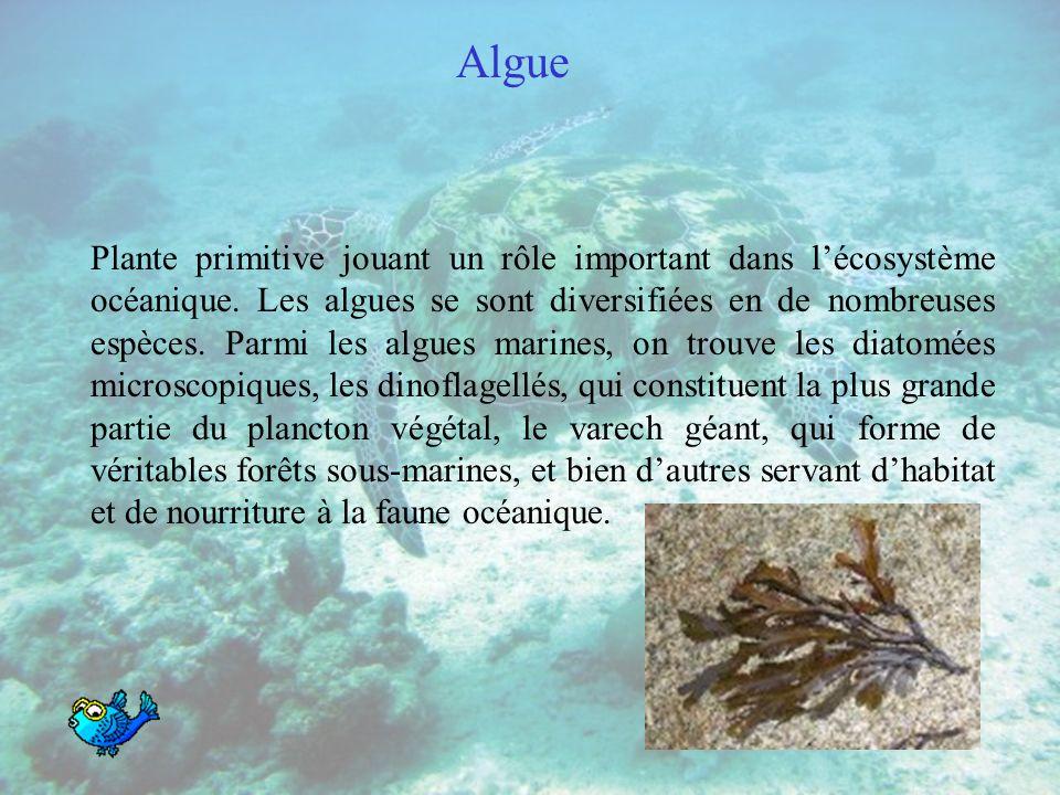 Algue Plante primitive jouant un rôle important dans lécosystème océanique.