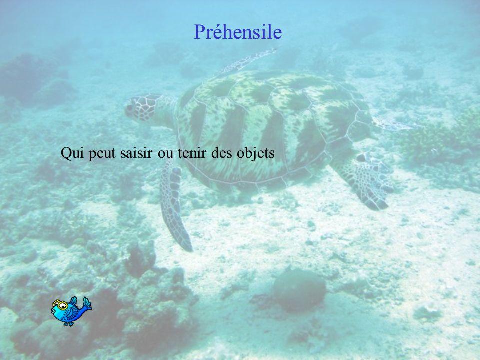 Algue Plante primitive jouant un rôle important dans lécosystème océanique. Les algues se sont diversifiées en de nombreuses espèces. Parmi les algues