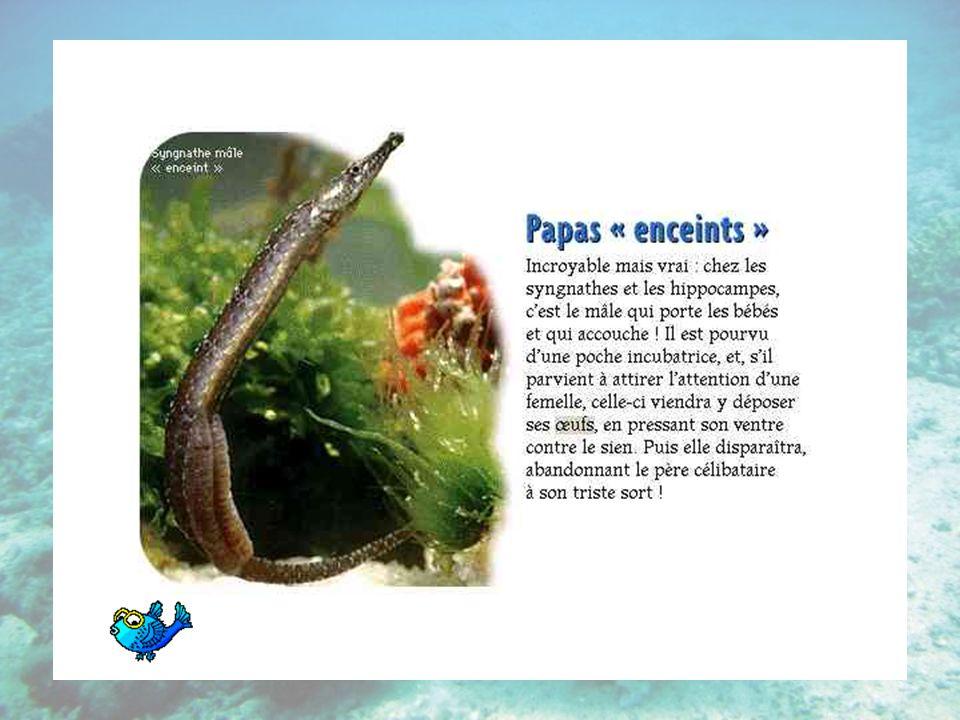Nageoire dorsale Nageoire principale située sur le dos des poissons et de beaucoup de cétacés, et faisant fonction de gouvernail.