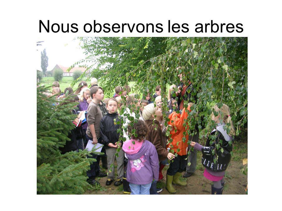 Nous observons les arbres
