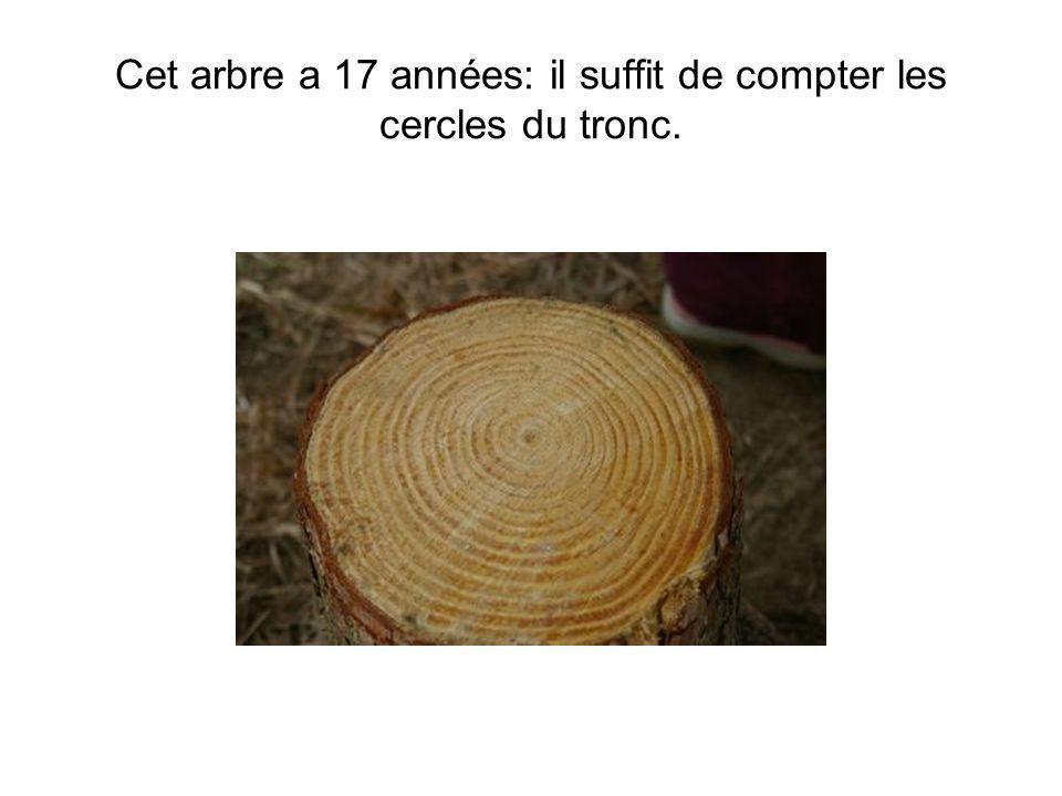 Cet arbre a 17 années: il suffit de compter les cercles du tronc.