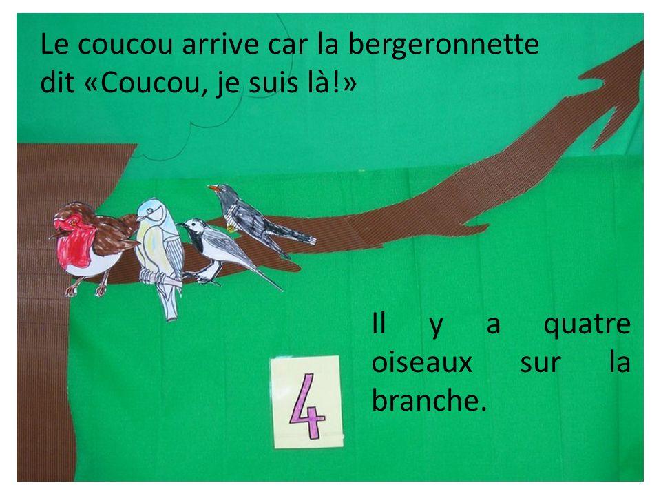 Le coucou arrive car la bergeronnette dit «Coucou, je suis là!» Il y a quatre oiseaux sur la branche.