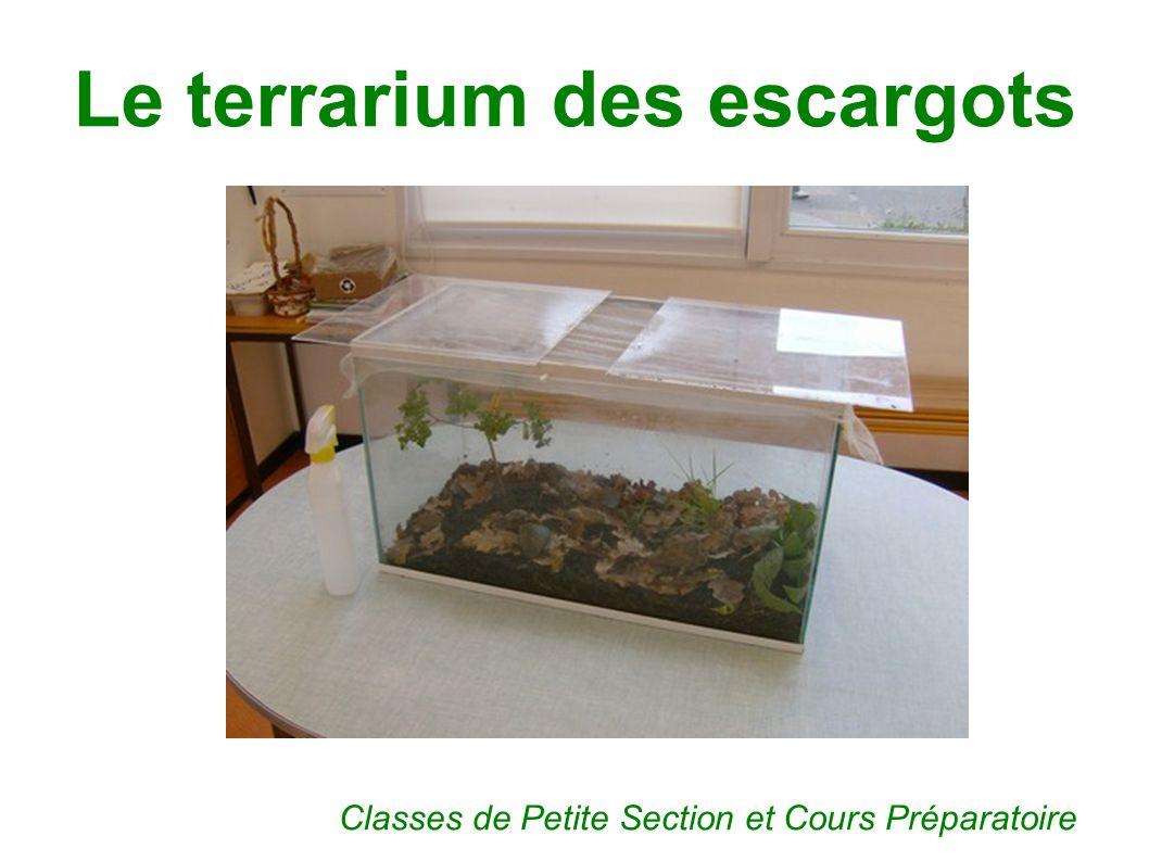 Le terrarium des escargots Classes de Petite Section et Cours Préparatoire