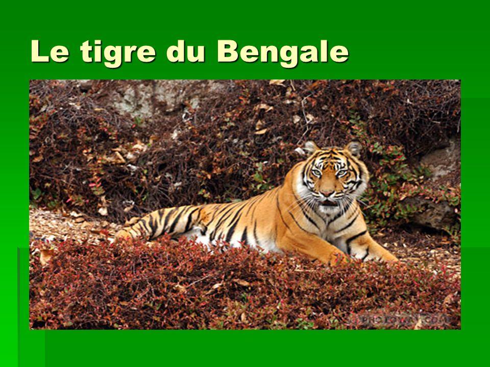 Où vit-il .Il vit à Madagascar et dans les îles de l océan Indien, et agit principalement la nuit.
