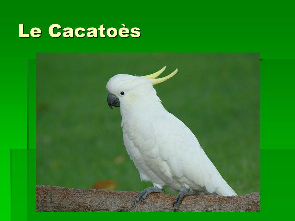 Où vit-il .C est un oiseau tropical, il est donc introuvable en Europe à l état sauvage.