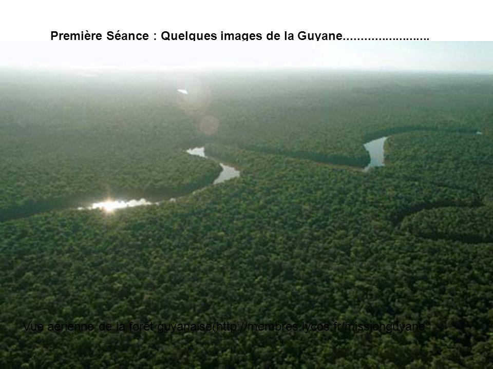 Première Séance : Quelques images de la Guyane......................... Vue aérienne de la forêt guyanaise(http://membres.lycos.fr/missionguyane°