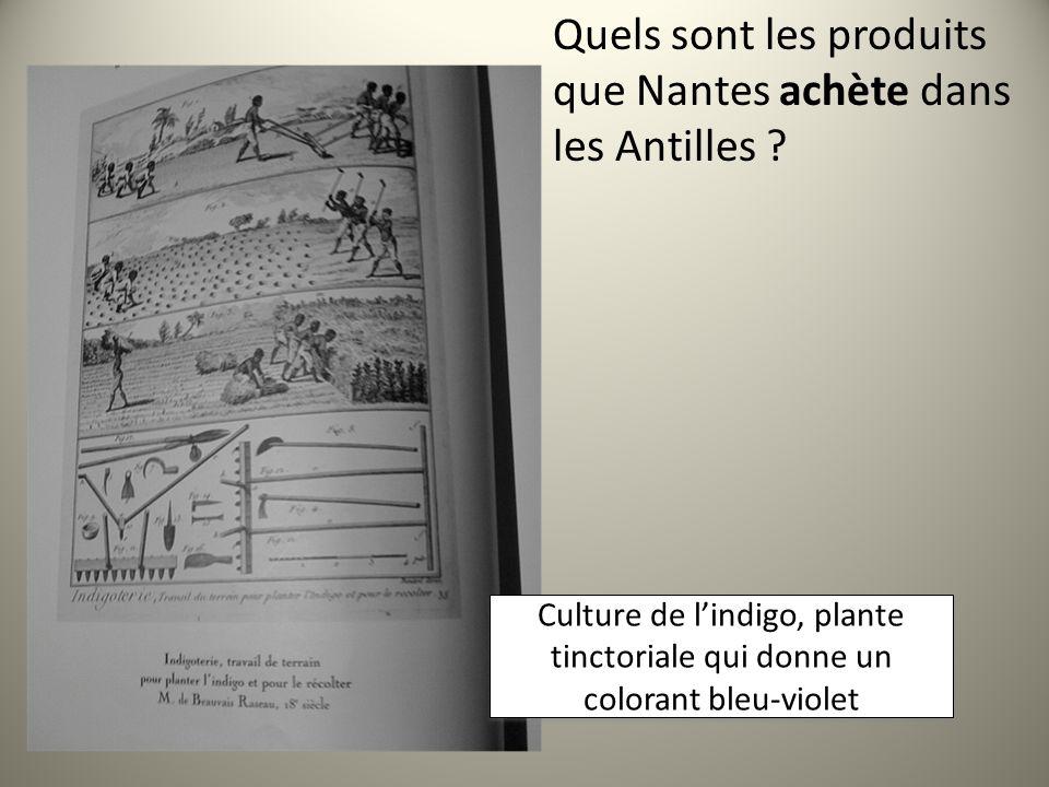 Quels sont les produits que Nantes achète dans les Antilles ? Culture de lindigo, plante tinctoriale qui donne un colorant bleu-violet