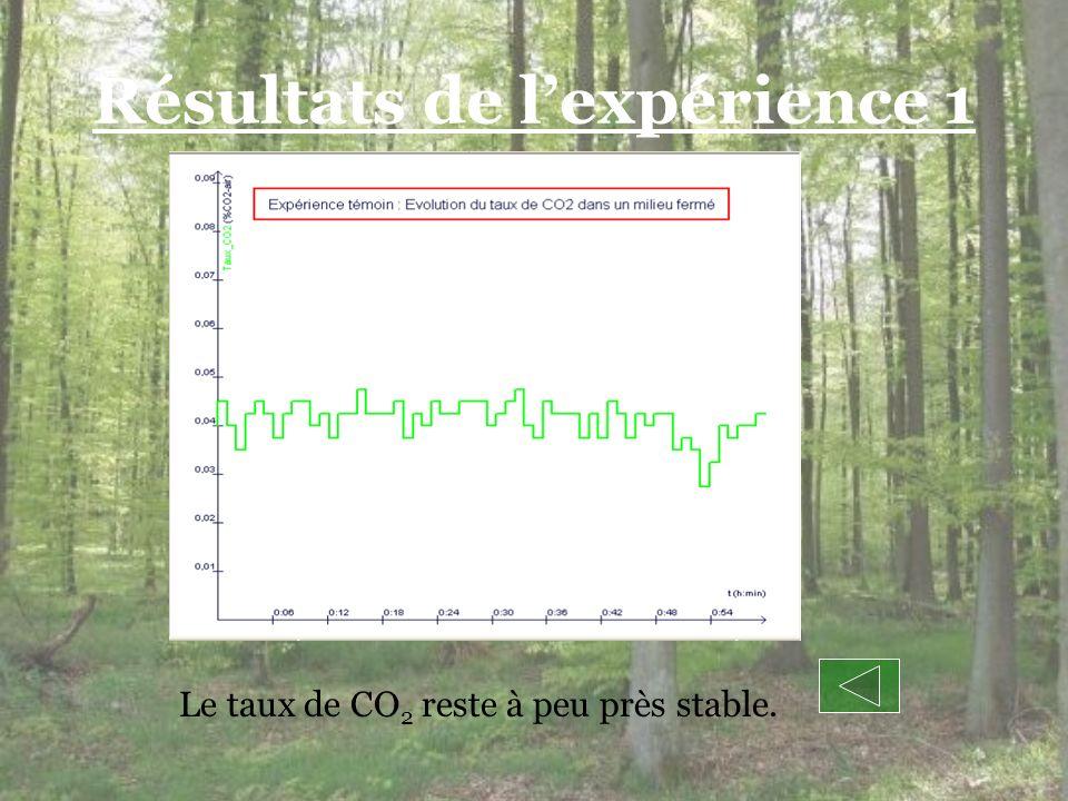 Résultats de lexpérience 1 Le taux de CO 2 reste à peu près stable.