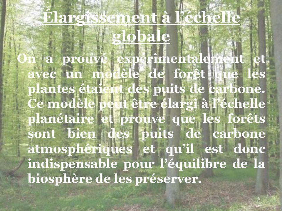 Élargissement à léchelle globale On a prouvé expérimentalement et avec un modèle de forêt que les plantes étaient des puits de carbone. Ce modèle peut