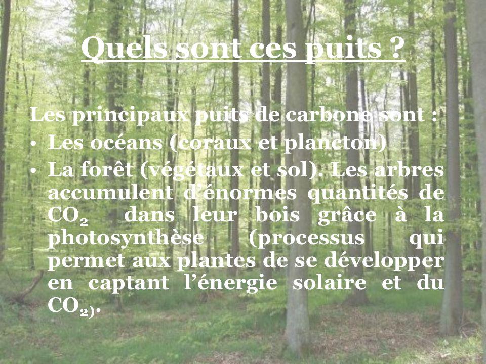 Quels sont ces puits ? Les principaux puits de carbone sont : Les océans (coraux et plancton) La forêt (végétaux et sol). Les arbres accumulent dénorm