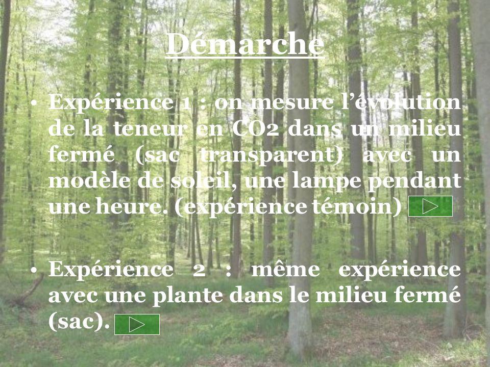 Expérience 3 : mesure de lévolution du taux de CO 2 dans un milieu fermé et sans lumière, un sac opaque (expérience témoin).
