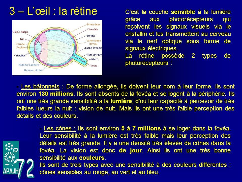 3 – Lœil : la rétine C'est la couche sensible à la lumière grâce aux photorécepteurs qui reçoivent les signaux visuels via le cristallin et les transm