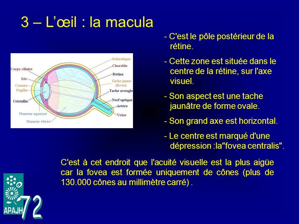 3 – Lœil : la macula - C'est le pôle postérieur de la rétine. - Cette zone est située dans le centre de la rétine, sur l'axe visuel. - Son aspect est