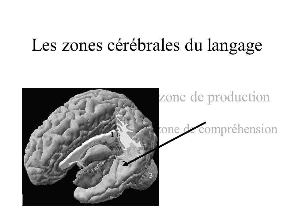 Les zones cérébrales du langage zone de production zone zone de compréhension