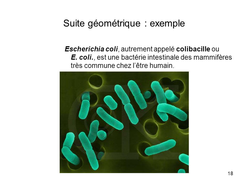 18 Suite géométrique : exemple Escherichia coli, autrement appelé colibacille ou E. coli., est une bactérie intestinale des mammifères très commune ch