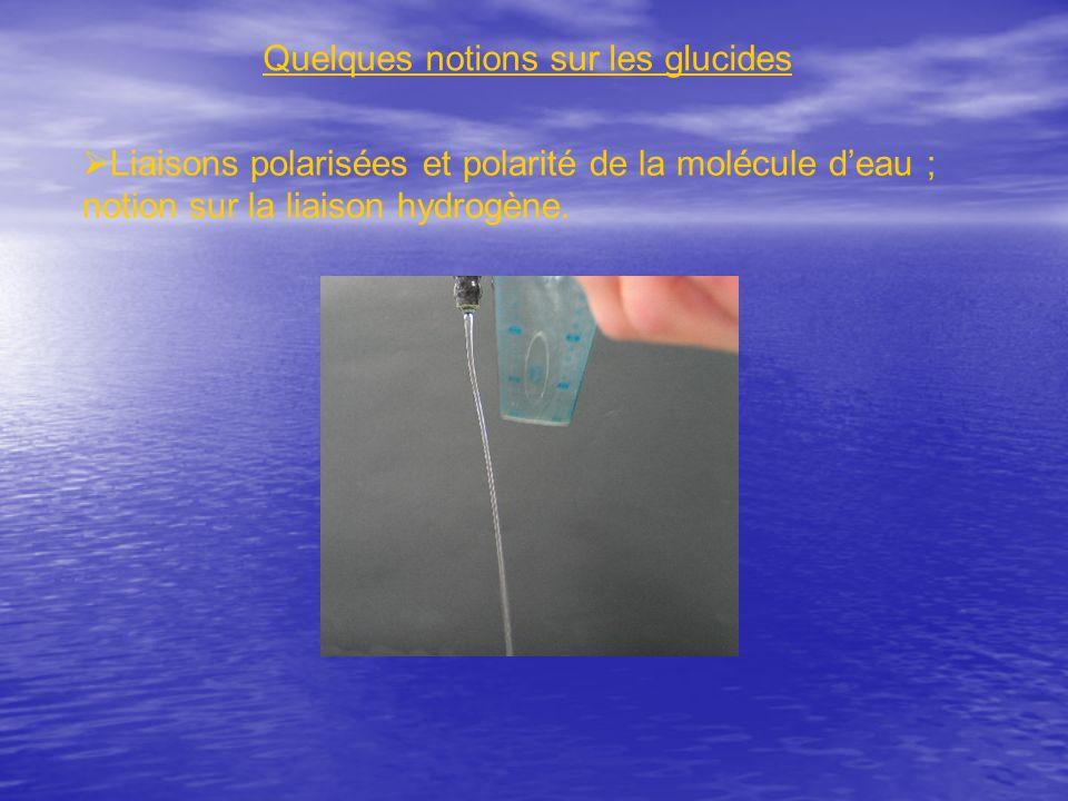 Quelques notions sur les glucides Liaisons polarisées et polarité de la molécule deau ; notion sur la liaison hydrogène.