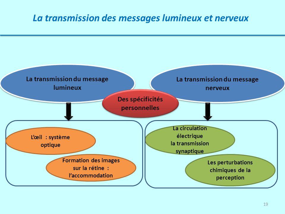 19 La transmission des messages lumineux et nerveux La transmission du message lumineux La transmission du message nerveux La circulation électrique l