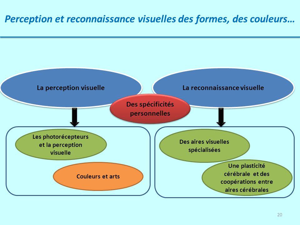 20 Perception et reconnaissance visuelles des formes, des couleurs… La perception visuelle La reconnaissance visuelle Les photorécepteurs et la percep