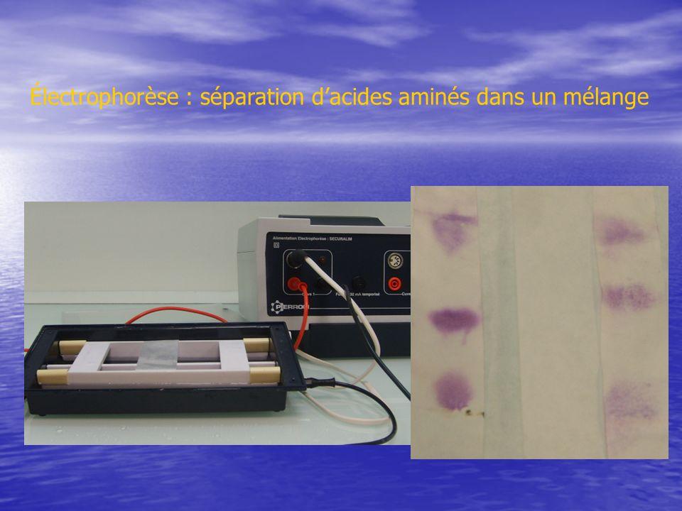 Électrophorèse : séparation dacides aminés dans un mélange