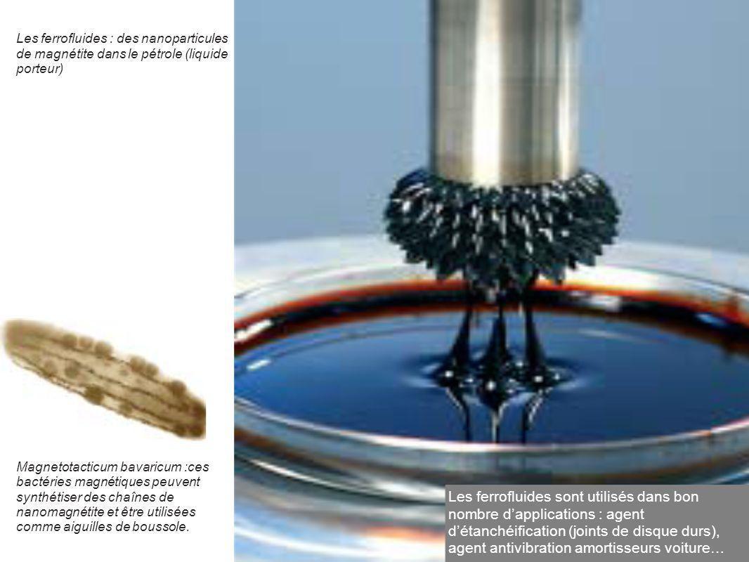 Magnetotacticum bavaricum :ces bactéries magnétiques peuvent synthétiser des chaînes de nanomagnétite et être utilisées comme aiguilles de boussole. L