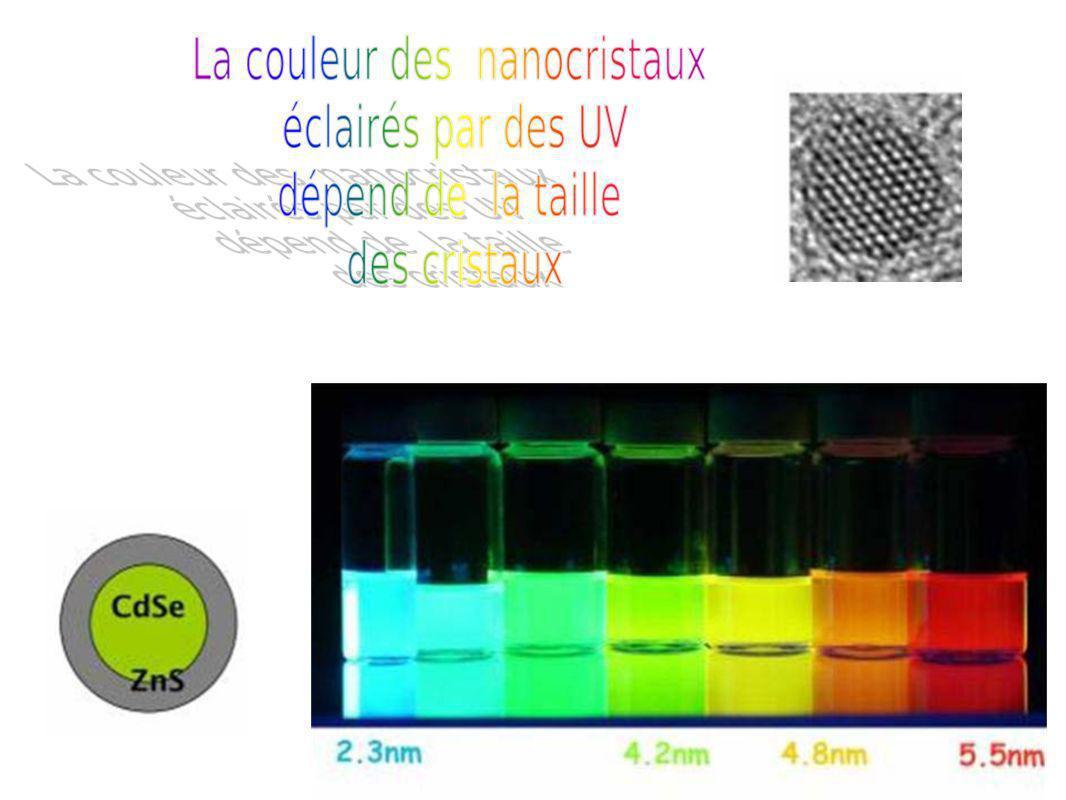 Magnetotacticum bavaricum :ces bactéries magnétiques peuvent synthétiser des chaînes de nanomagnétite et être utilisées comme aiguilles de boussole.