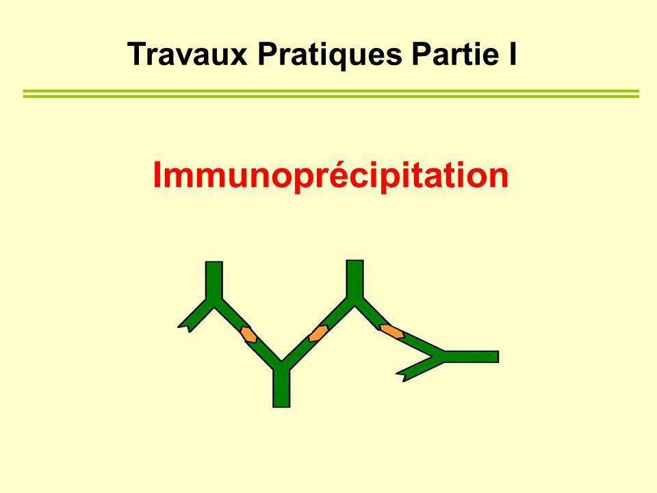 Immunoprécipitation Travaux Pratiques Partie I