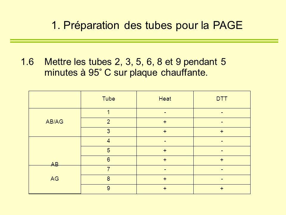 1.6 Mettre les tubes 2, 3, 5, 6, 8 et 9 pendant 5 minutes à 95° C sur plaque chauffante. 1. Préparation des tubes pour la PAGE
