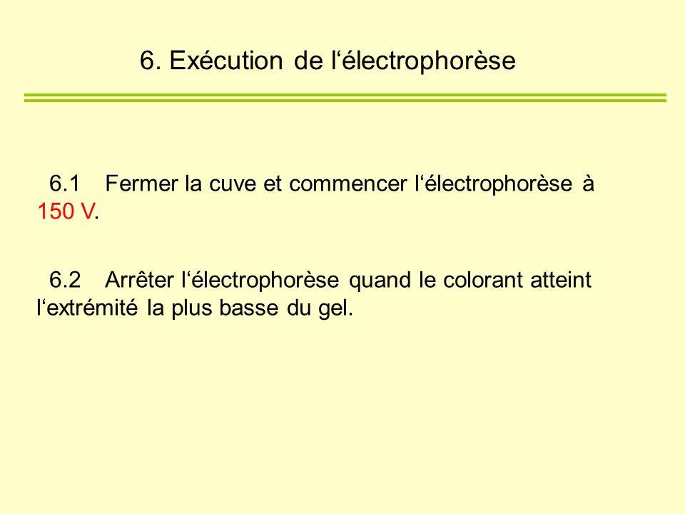 6.1Fermer la cuve et commencer lélectrophorèse à 150 V. 6.2Arrêter lélectrophorèse quand le colorant atteint lextrémité la plus basse du gel. 6. Exécu