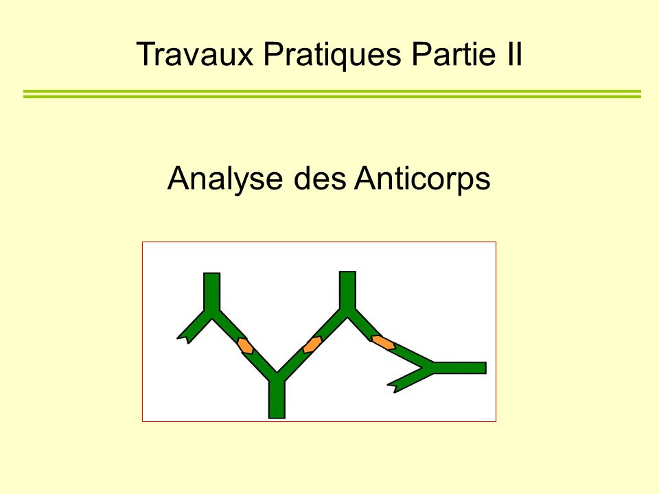 Analyse des Anticorps Travaux Pratiques Partie II