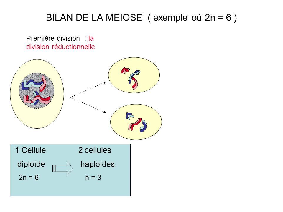 BILAN DE LA MEIOSE ( exemple où 2n = 6 ) Première division : la division réductionnelle 1 Cellule 2 cellules diploïde haploïdes 2n = 6 n = 3
