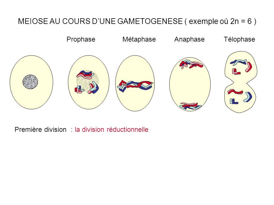 MEIOSE AU COURS DUNE GAMETOGENESE ( exemple où 2n = 6 ) ProphaseMétaphaseAnaphaseTélophase Première division : la division réductionnelle